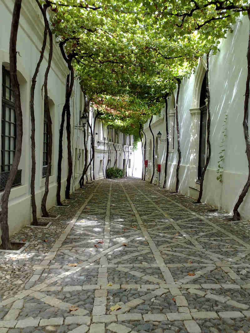 Visita a las bodegas de Tio Pepe en Jerez