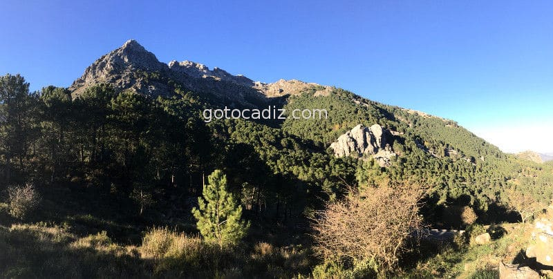 pinsapar parque sierra de grazalema sierra de cadiz