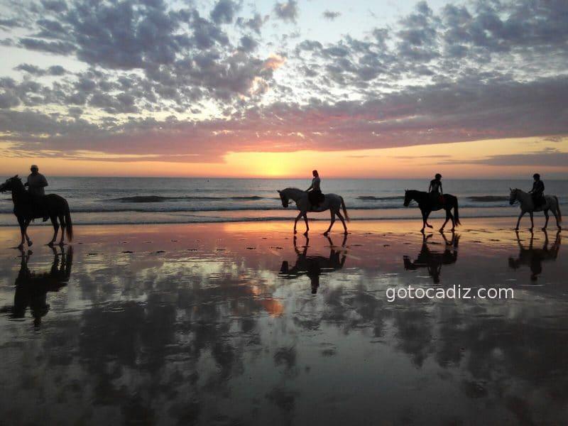 Caballos a la puesta de sol en la playa de Roche