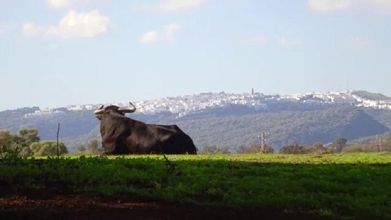 Toro Bravo de Cádiz