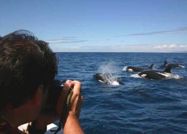Avistamiento de Orcas. Fuente: Turmares
